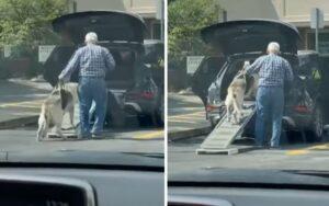 uomo costruisce una rampa per permettere al suo cane anziano di salire in macchina