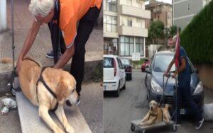 uomo usa un carretto per portare il suo cane ormai anziano a spasso