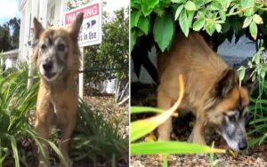 cane abbandonato in un cimitero viene salvato da un dipendente e trova una nuova famiglia