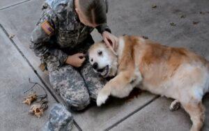 cane si commuove quando vede tornare la sua migliore amica dall'esercito