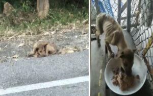 cane malnutrito e ferito viene trovato sul ciglio di una strada