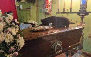 cagnolina si sdraia sulla bara del suo proprietario per salutarlo