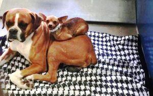 due cagnolini inseparabili hanno trovato una famiglia che li adottasse insieme