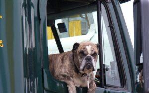 tutto quello che c'è da sapere se vediamo un cane chiuso in macchina con il caldo