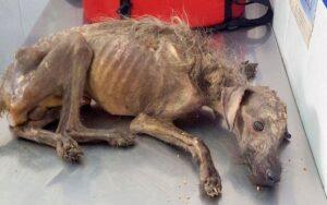 cane in pericolo di morte viene salvato da una donna, che lo ha fatto riprendere del tutto