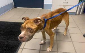 cane malnutrito viene trovato e partono le indagini della polizia