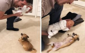 cane conosce per la prima volta il suo fratellino dopo 9 mesi di gravidanza