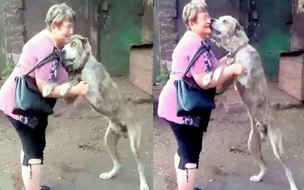 donna ritrova il suo cane rubato due anni prima tramite un annuncio online