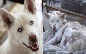 cane vive per mesi nella spazzatura ma poi viene salvato