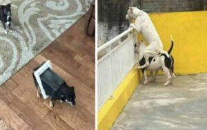 15 cani che sono stati fotografati mentre fanno cose strane e divertenti
