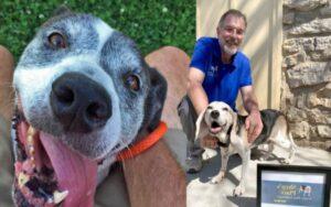 uomo decide di aprire un santuario per accogliere cani anziani