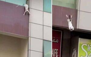 quattro uomini salvano una gatta incinta e uno sceicco li ricompensa