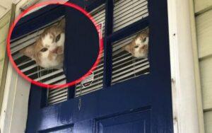 gatto mostra tutta la sua rabbia con il proprietario che lo ha lasciato dentro