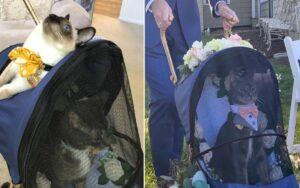gatto di un giornalista fa da testimone a un matrimonio, assumendo un carattere solenne