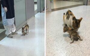 mamma gatta porta il suo cucciolo malato a fare una visita