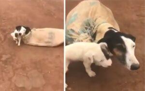 donna salva mamma cane e i suoi bambini, legati a un sacco e abbandonati nel nulla