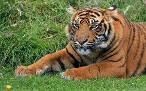 hotel con alloggio all'interno del recinto delle tigri