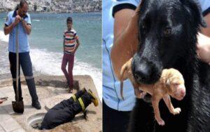 vigili del fuoco e mamma cane collaborano per salvare i cuccioli