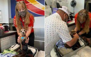 cagnolino si nasconde all'interno della valigia dei suoi proprietari e viene trovato in aeroporto