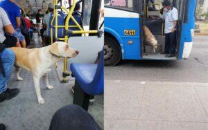 cane sale sopra i mezzo pubblici alla ricerca del suo papà