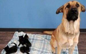 cagnolino randagio è stato trovato abbracciato a dei gattini per coprirli dal fredo