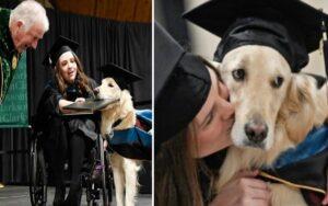 cane d'assistenza riceve un titolo speciale per la sua dedizione al lavoro
