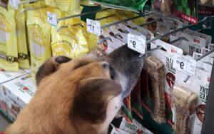 ragazzo porta un cane randagio in un negozio di animali e compra tutto ciò che vuole