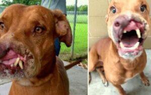 cane trovato con il volto sfigurato viene curato e adottato