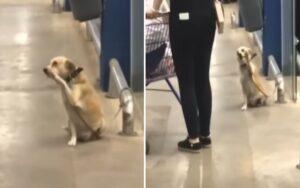 cane saluta i passanti all'interno di un supermercato