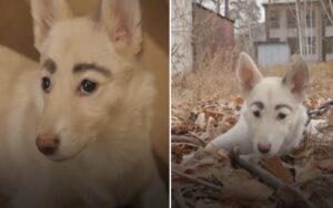 cane randagio con delle folte sopracciglia viene adottato