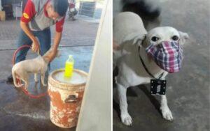 cane abbandonato viene adottato dai dipendenti di una stazione