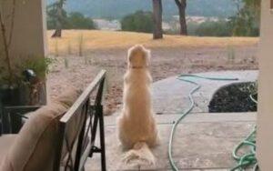 cane ogni giorno si mette a osservare il tramonto