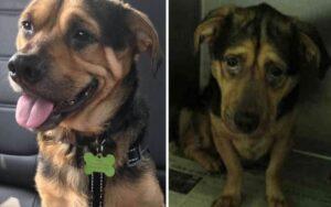 cane più triste del rifugio viene adottato e ora ha una nuova vita