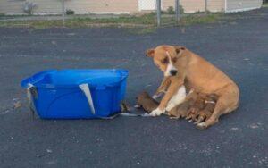 cagnolina viene abbandonata insieme ai suoi 9 cuccioli fuori un parcheggio