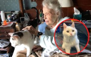 donna di 101 anni adotta un gatto anziano di 19 anni