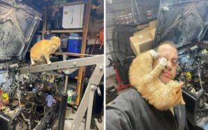uomo trova un gattino nel suo garage e diventano subito ottimi amici