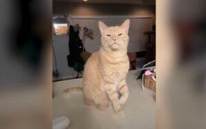 gatto si finge zoppo per ricevere attenzioni dalla sua mamma