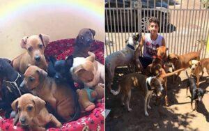 ragazzo apre un rifugio in brasile salva 22 cani e 4 gatti