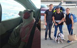 Famiglia si vende tutto ciò che ha per poter noleggiare un aereo e permettere al loro cane di arrivare in Svizzera
