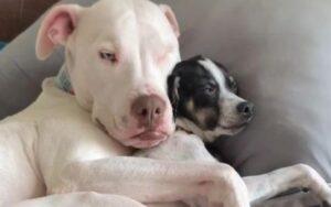 Winky, il cane sordo e orbo abbracciato al suo amico chihuahua